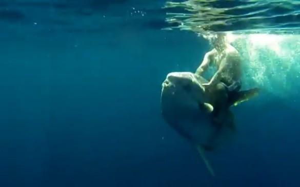 Man Rides Mola Mola
